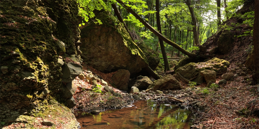 Forest walks | Discover the magical forests of the Mátra mountains