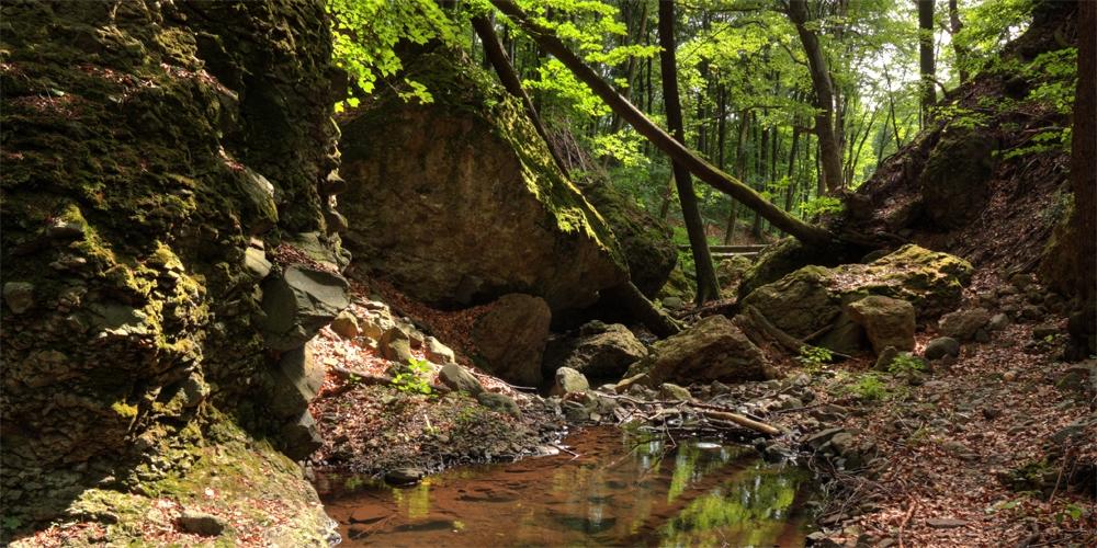 Erdei séták | Fedezze fel a Mátra vadregényes erdeit