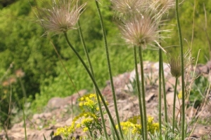 Ágasvár galéria - Növények