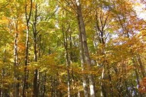 Ágasvár galéria - Erdő